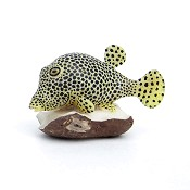 Sealife Tagua Carving from Panama