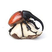 Arthropod Tagua Carving from Panama